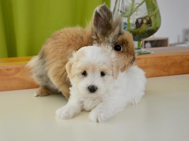 králík a pes