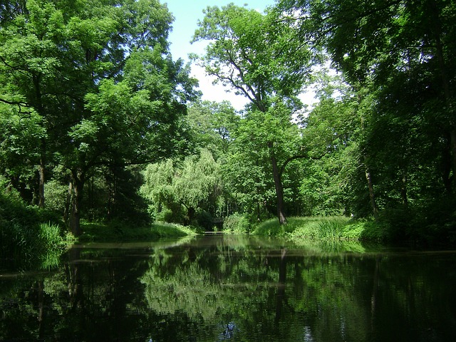 stromy kolem rybníka