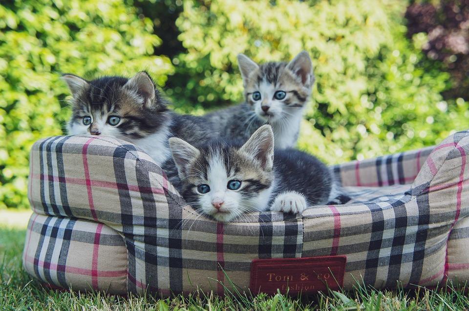 koťata na zahradě